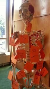 TPC Skeleton